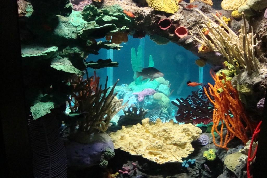 Farbenfrohe Unterwasserwelt im Oceonário de Lisboa